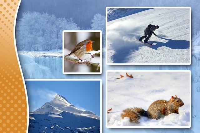 winter-567920_640